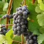 Vignoble d'Estaing