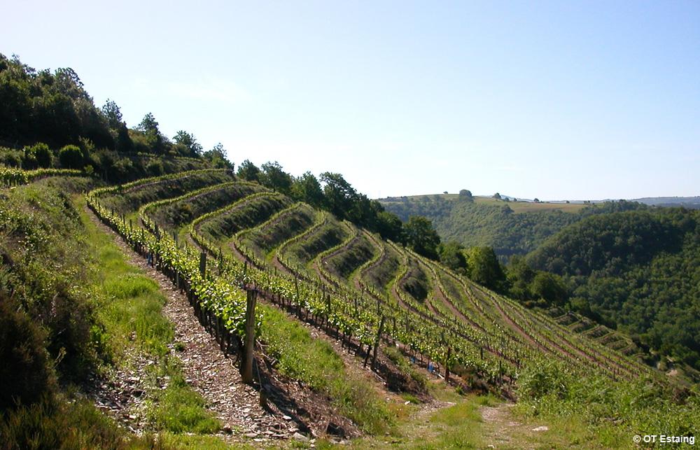 Les terrasses du vignoble d'Estaing