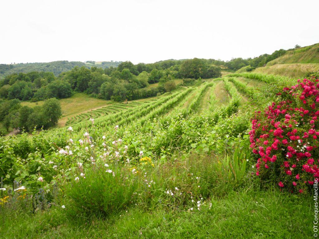 Vignoble Domaine du Cros, Marcillac, Aveyron