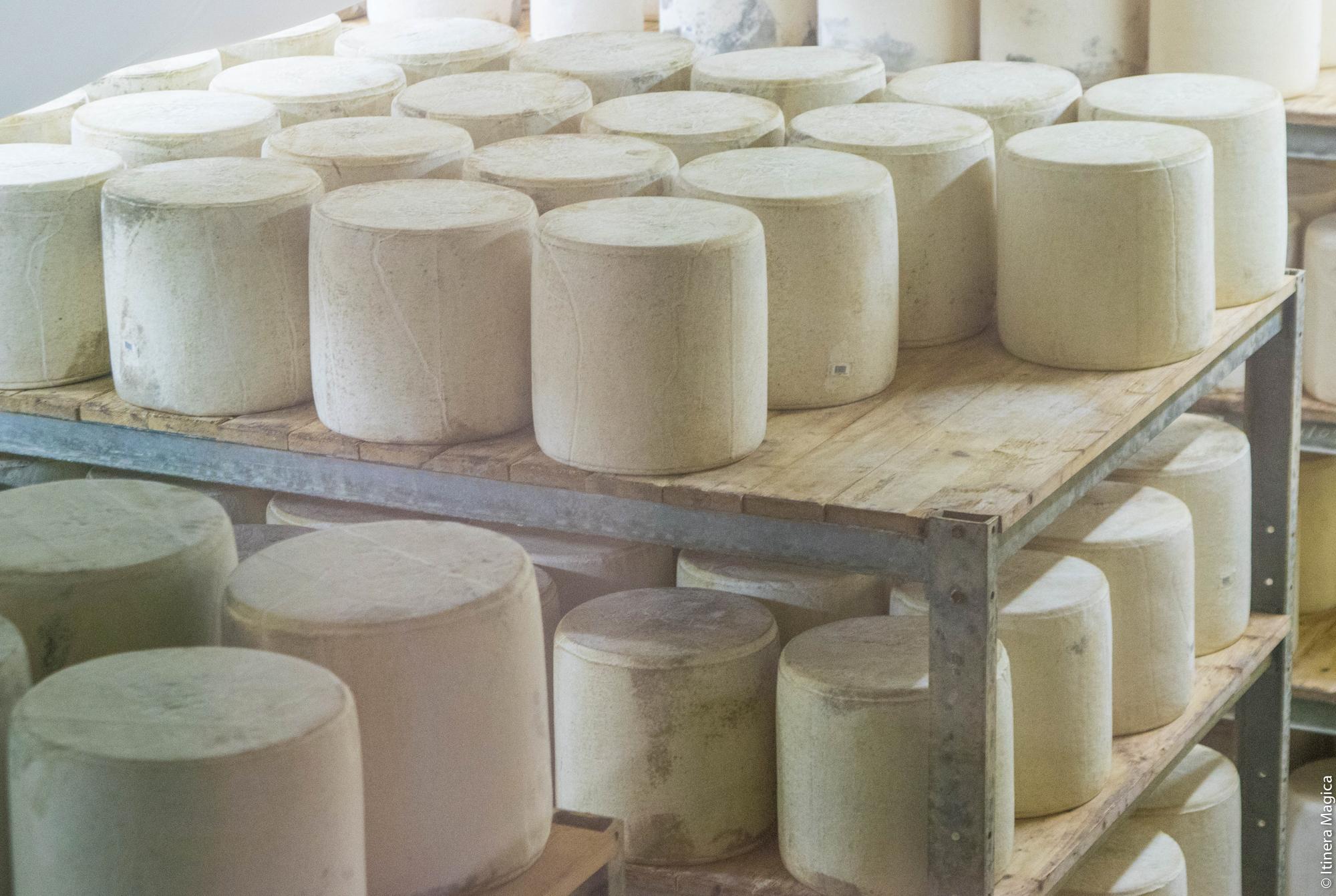 Affinage du fromage Laguiole à la Coopérative Jeune Montagne © Itinera Magica